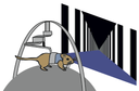 Estimation of self-motion duration and distance in rodents - new publication by Kautzky & Thurley
