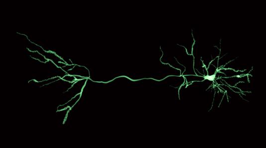 Tuft dendrites of pyramidal neurons - new publication by Eberhardt et al.